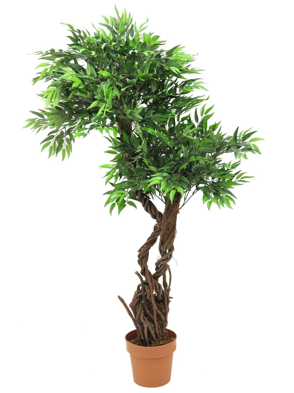 Loofbomen & Ficus