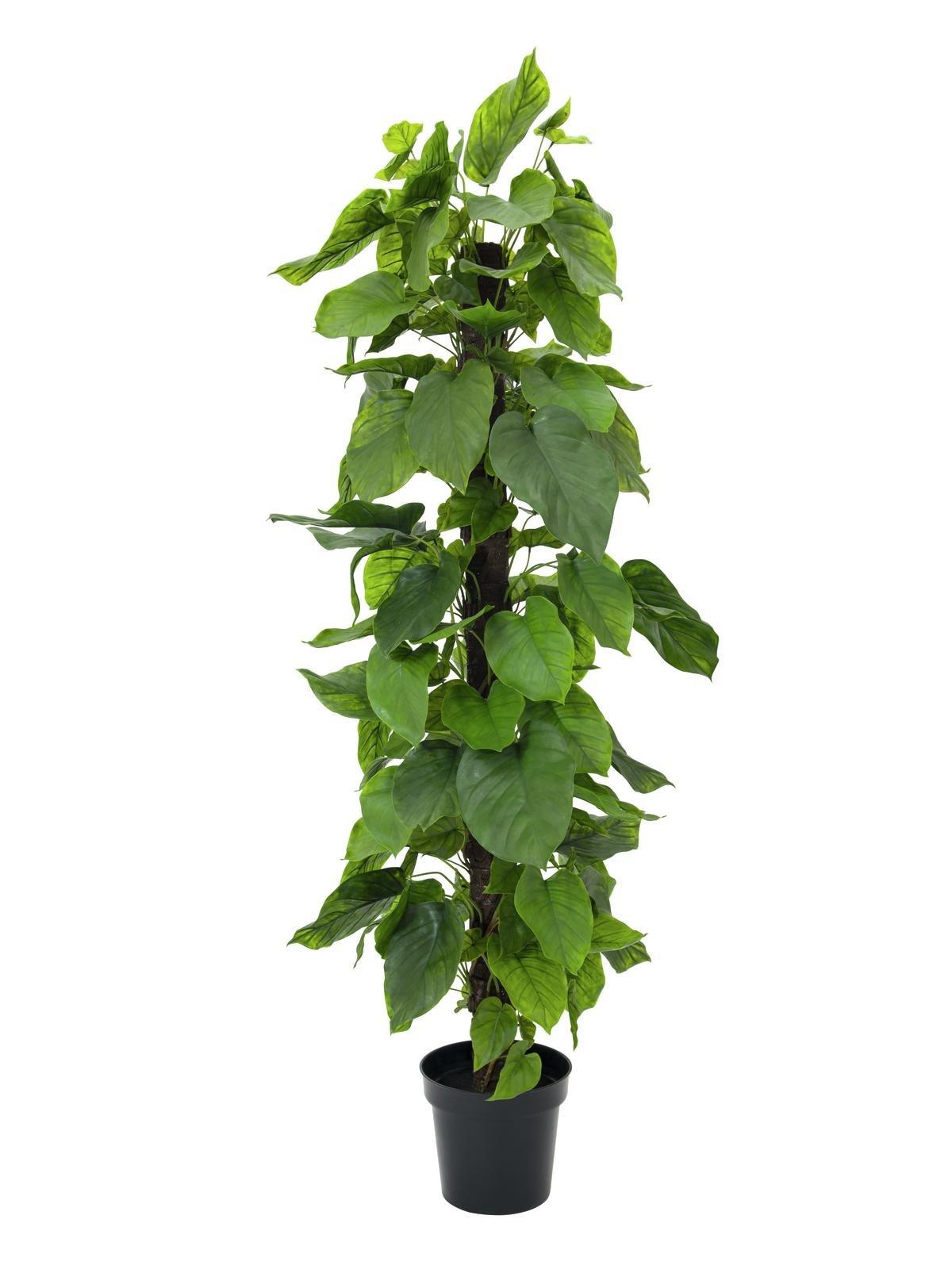 Breedbladerige Planten