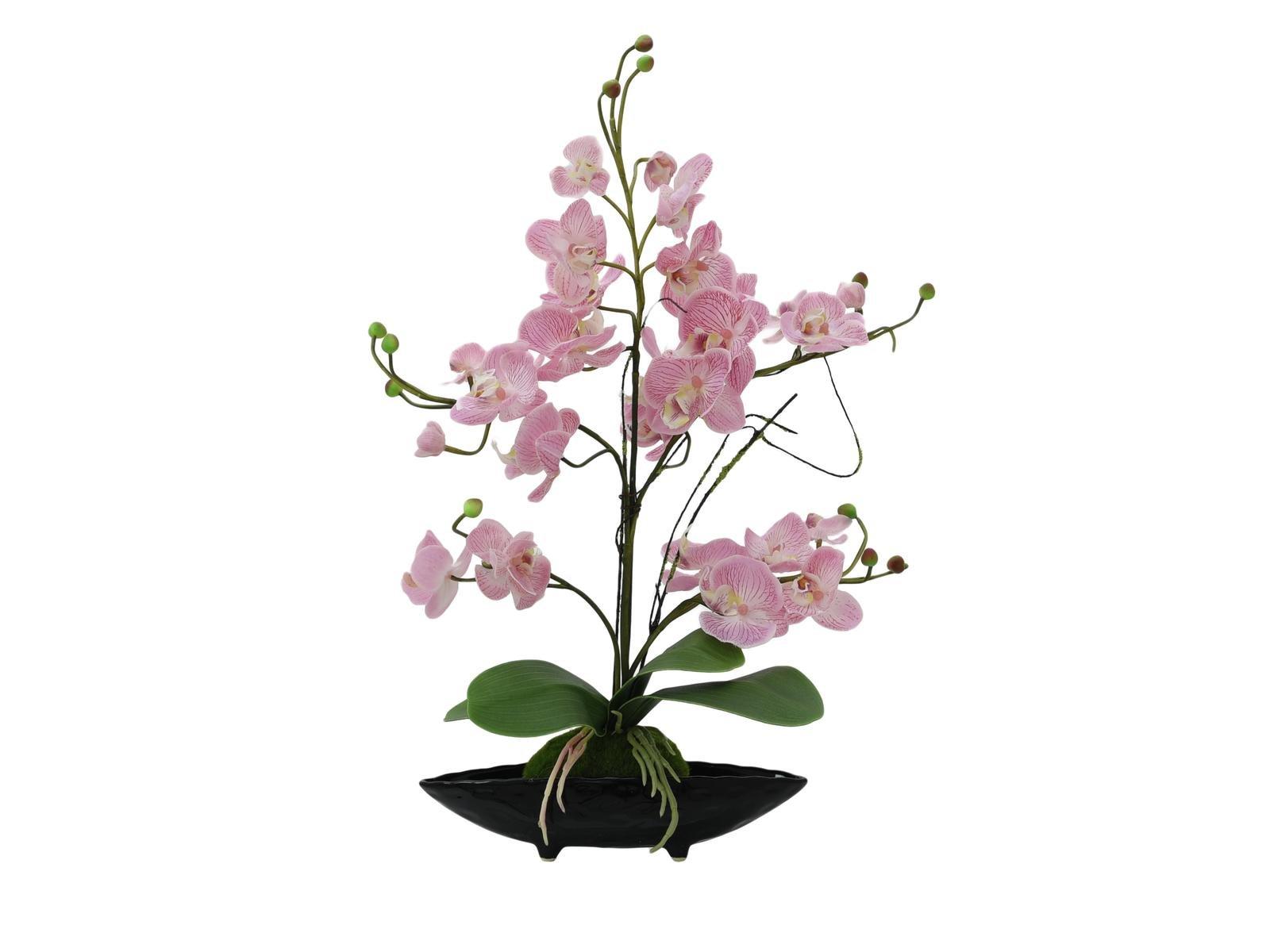 EVA Planten