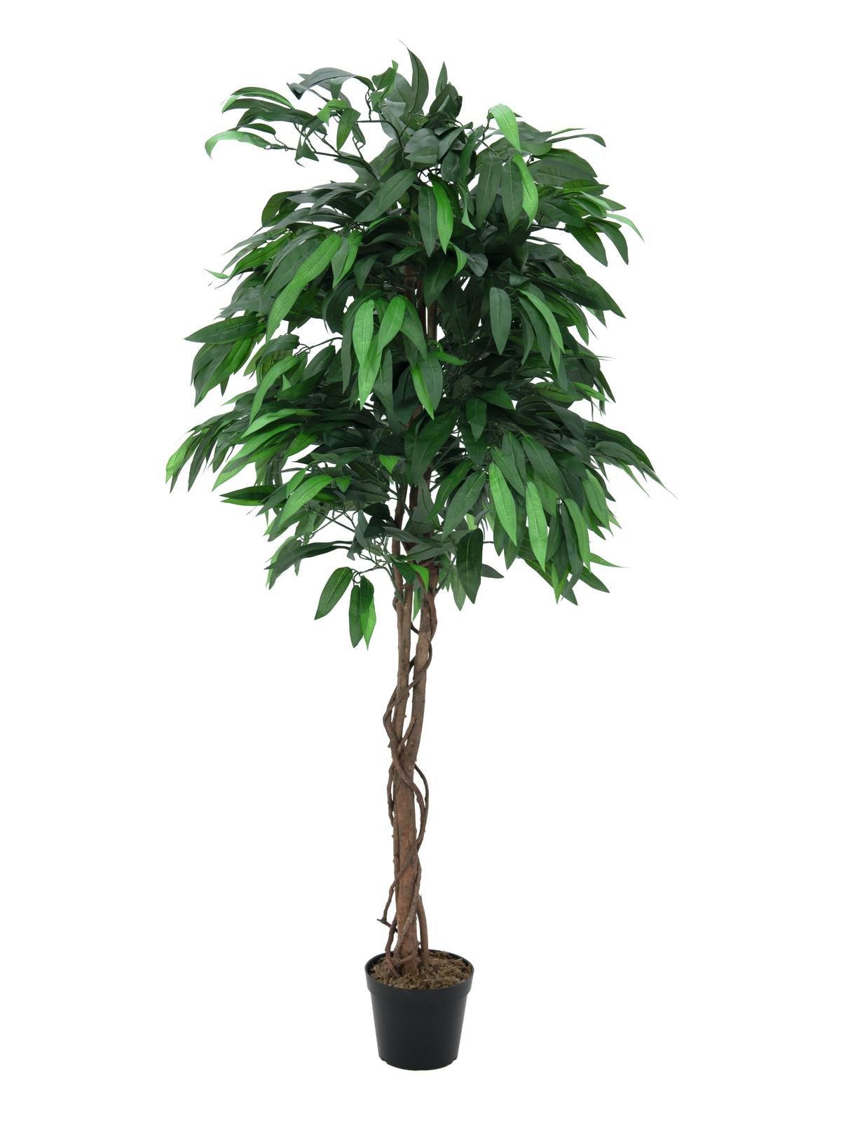 Jungle Planten