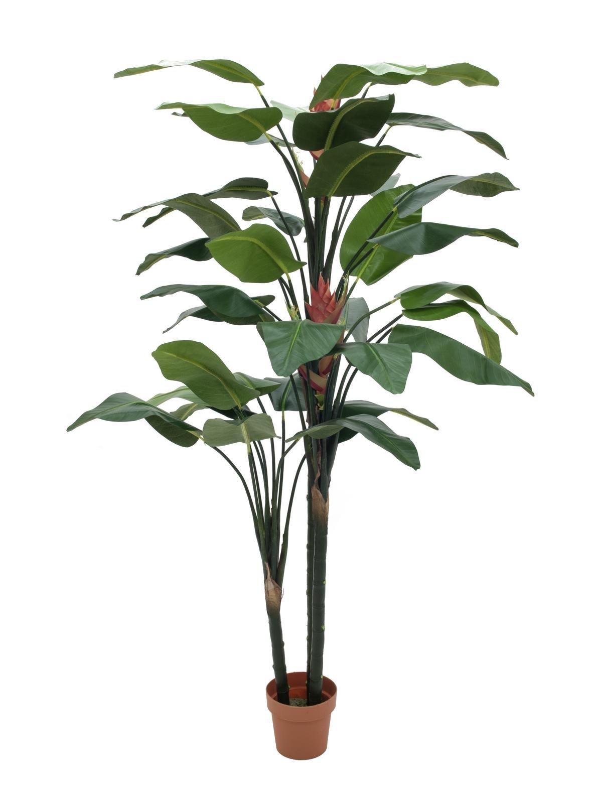 Solitaire Planten