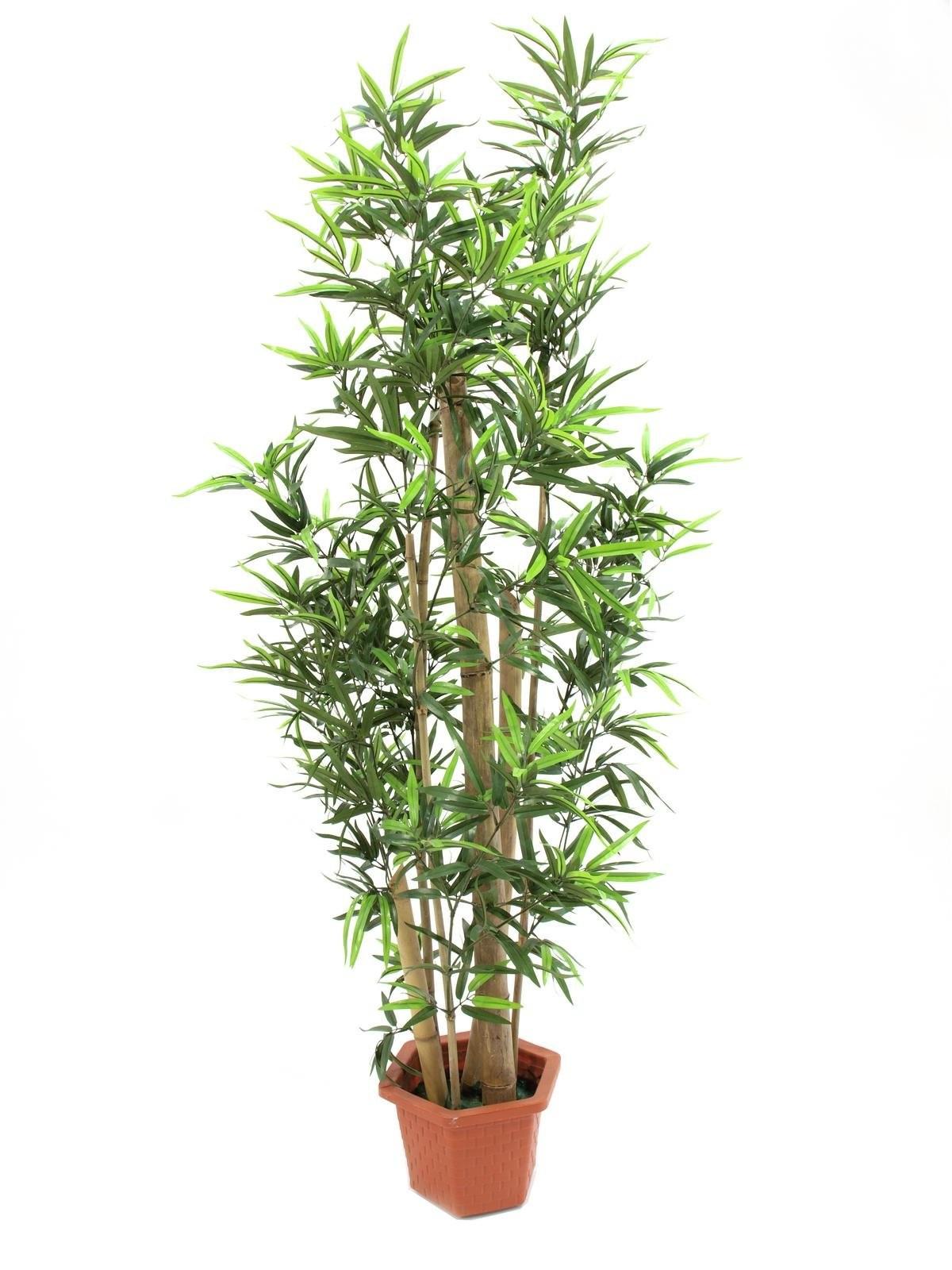 Bamboo met natuurlijke stelen, 205cm