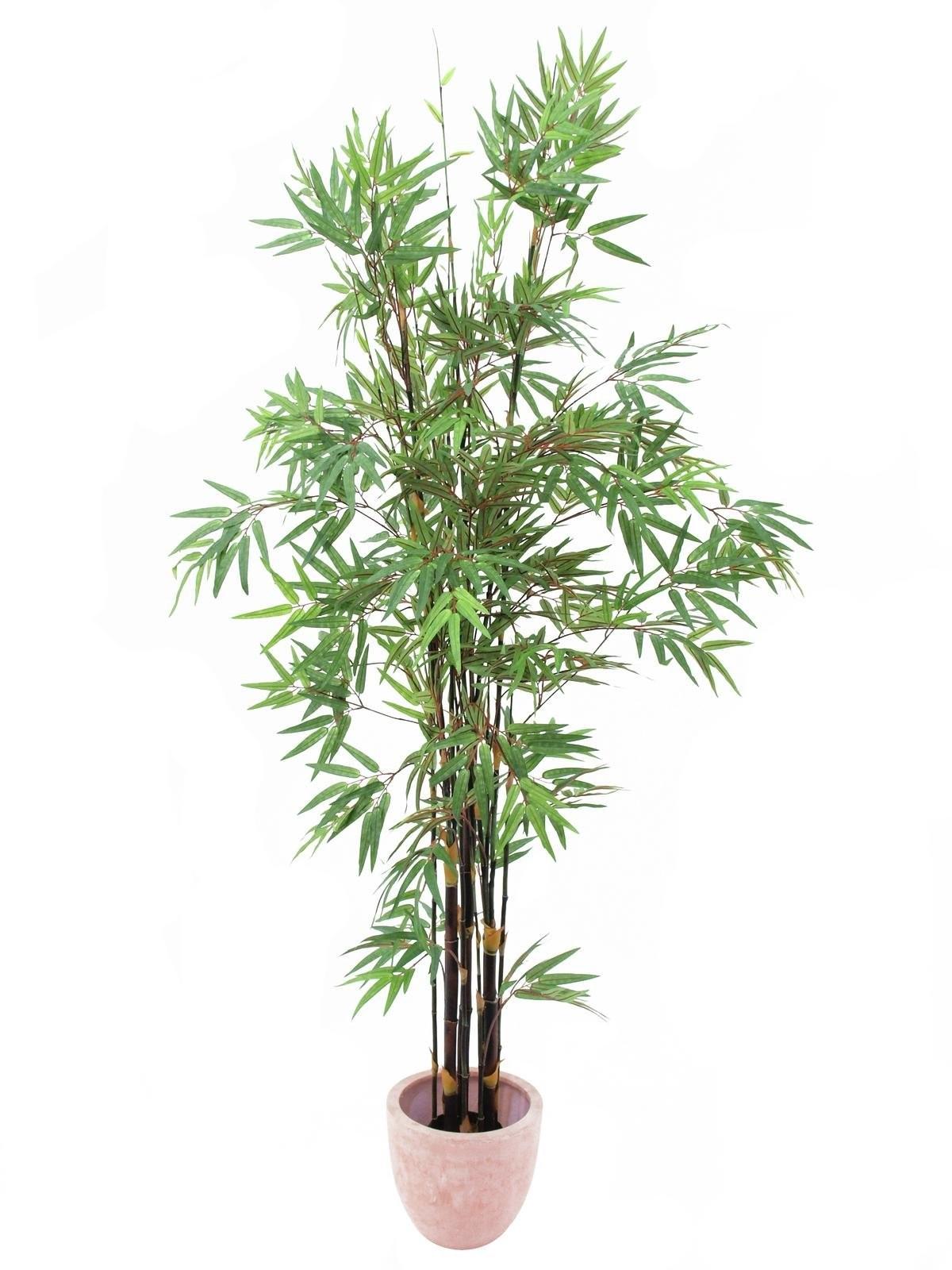 Bamboo met donkere stam, 240cm