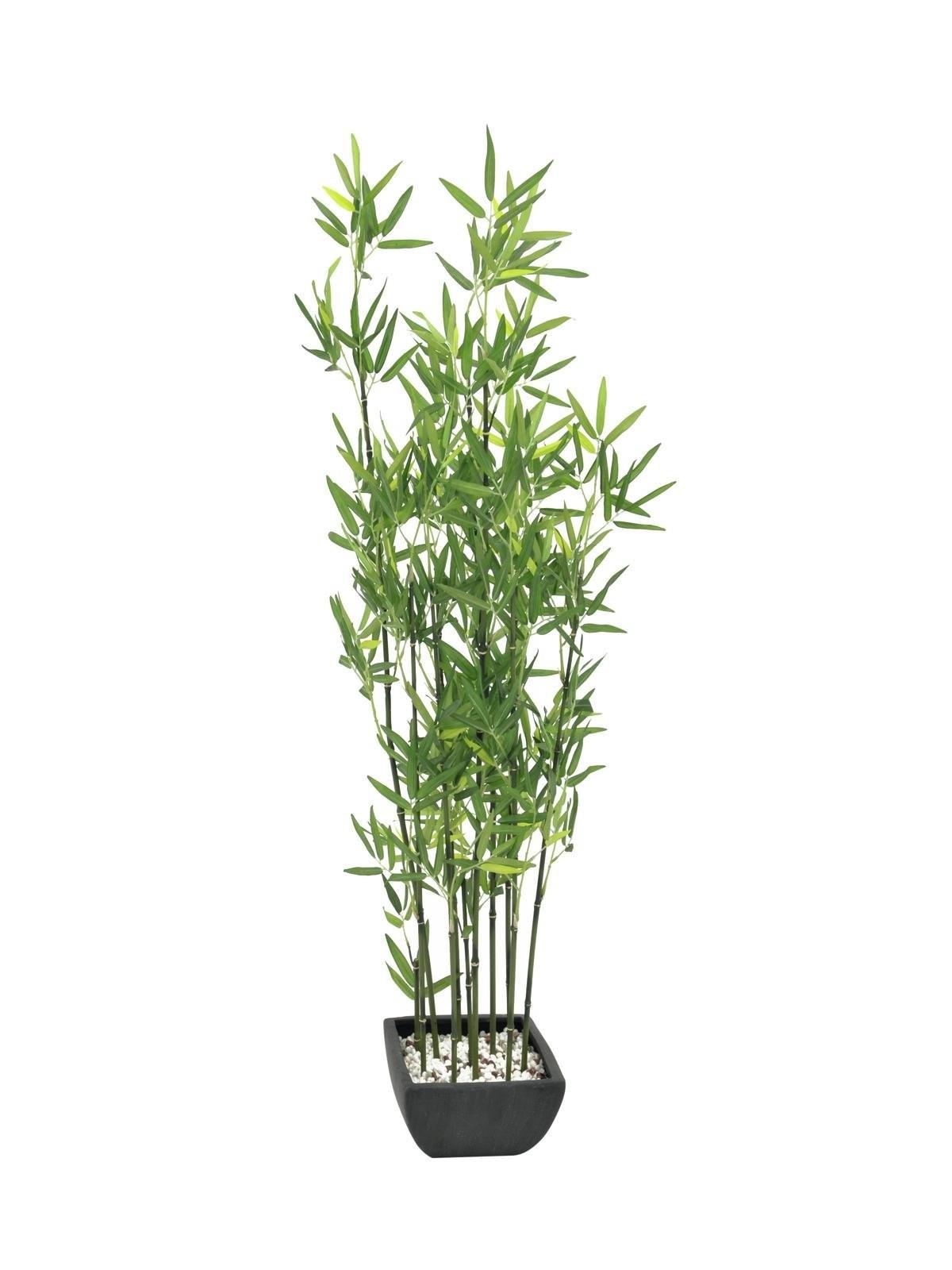 Bamboo in schaal, 120cm