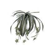 Spinnen plant, 60cm