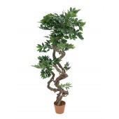 Ficus spiraal stam, 160cm