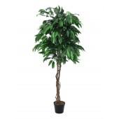 Jungle boom Mango, 210cm