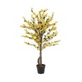 Forsythia boom met gele bloesem, 120cm