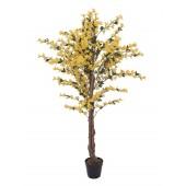 Forsythia boom met gele bloesem, 150cm