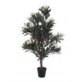 Oleander boom wit, 120cm