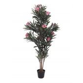 Oleander boom roze, 150cm