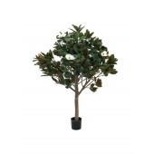 Magnolia boom, 150cm