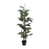 Dieffenbachia, 120cm