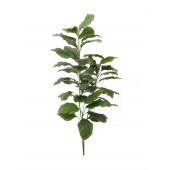 Caladium plant met 3 takken, 150cm
