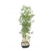 Bamboo in schaal, 150cm