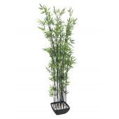 Bamboo in schaal, 180cm
