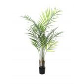 Areca palm met grote bladeren, 125cm