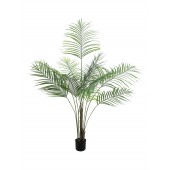 Areca palm met grote bladeren, 185cm