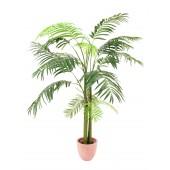 Areca palm met 3 stammen, 210cm