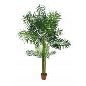 Areca palm met 4 stammen, 240cm
