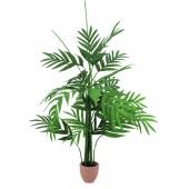 Areca palm, 230cm