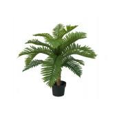 Cycas pamboom, 70cm