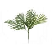 Areca palm zaailing, 60cm