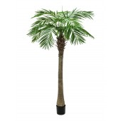 Phoenix palm luxe, 240cm