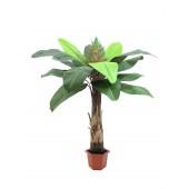 Paradijsvogel palm, 180cm