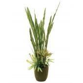 Succulent Mix, 190cm
