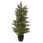 Bos Ficus Zilver, 120cm