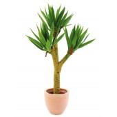 Yucca palmstruik, 105cm