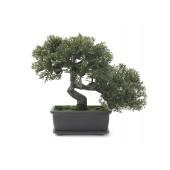 Bonsai, 21cm