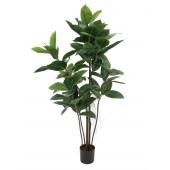 Rubberboom, 120cm