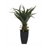 Agave plant met pot, 75cm