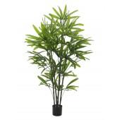Rhapis palm, 175cm
