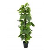 Pothos plant, 180cm