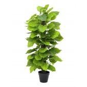 Pothos plant, 125cm