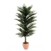 Pinus boom, 150cm