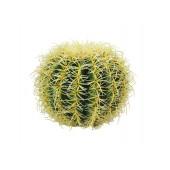 Californische Barrel Cactus, 25cm