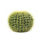 Californische Barrel Cactus, 35cm